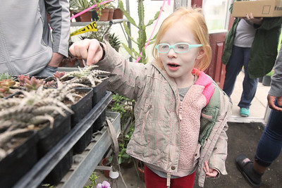 Candace H. Johnson-For Shaw Media Dessa Cranmer, 6, of Round Lake Heights looks at a succulent plant during the Allendale Plant Sale in Lake Villa. The plants were grown by Allendale's prevocational horticulture class. (5/11/18)