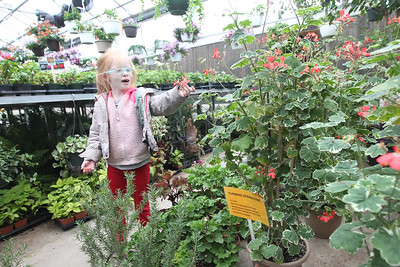 Candace H. Johnson-For Shaw Media Dessa Cranmer, 6, of Round Lake Heights looks at a pretty red flower on a climbing geranium during the Allendale Plant Sale in Lake Villa. The plants were grown by Allendale's prevocational horticulture class. (5/11/18)