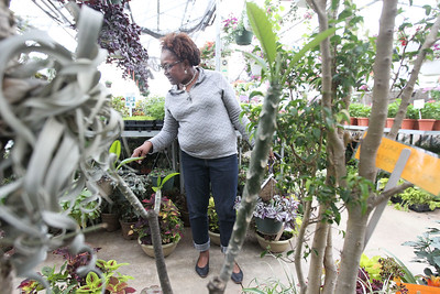 Candace H. Johnson-For Shaw Media Alice McCoy, of Round Lake Beach checks out the different plants for sale in the greenhouse during the Allendale Plant Sale in Lake Villa. The annuals, vegetables, herbs, succulents, and other varieties of plants  were grown by Allendale's prevocational horticulture class. (5/11/18)
