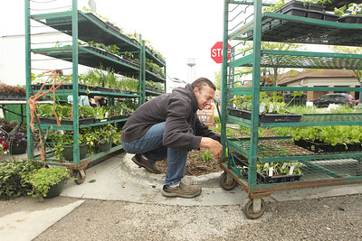 Candace H. Johnson-For Shaw Media Eric Quinn, of Grayslake picks out vegetable plants from Geneva Lakes Produce at the Spring Grayslake Farmers Market on Center Street in downtown Grayslake. The Spring Market runs on Saturdays through May 26th from 10-2:00 pm. and the Summer Market runs on Wednesdays May 30- September 26 from 3-7:00 pm. (5/19/18)