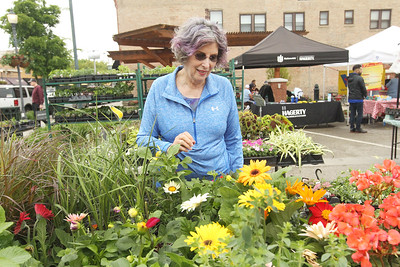 Candace H. Johnson-For Shaw Media Sue Muchowski, of Gurnee looks at flowering plants for sale by Geneva Lakes Produce at the Spring Grayslake Farmers Market on Center Street in downtown Grayslake. The Spring Market runs on Saturdays through May 26th from 10-2:00 pm. and the Summer Market runs on Wednesdays May 30- September 26 from 3-7:00 pm. (5/19/18)