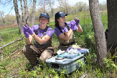Candace H. Johnson-For Shaw Media Veterinarian technicians Lauren Mumm and Kirsten Andersson, both of Savoy, use a veterinary lab on location to weigh, take DNA samples, and check the blood work of endangered Blanding's turtle hatchlings before releasing them into local wetlands in northeast Lake County along Lake Michigan for the Lake County Forest Preserves Blanding's Turtle Recovery Program.(5/23/18)