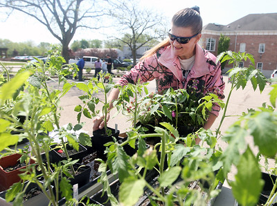 Candace H. Johnson-For Shaw Media Renee Wright, of Grayslake picks out a tomato plant during the Grayslake Greenery Garden Club Annual Plant Sale in the parking lot close to the Village Hall in Grayslake. (5/18/19)