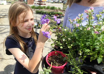 Candace H. Johnson-For Shaw Media Savannah Mason, 8, of Grayslake looks at a flowering plant she picked out with her mother, Jennifer, as she holds a tray of plants during the Grayslake Greenery Garden Club Annual Plant Sale in the parking lot close to the Village Hall in Grayslake. (5/18/19)