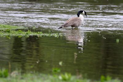 hnews_0518_Monday_Flooding