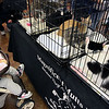 Jeff Krage – For the Kane County Chronicle<br /> One-year-old Maddie Jurca of Oswego looks at cats up for adoption by Magnificent Mutts Rescue during Saturday's Chicago Pet Show at the Kane County Fairgrounds.<br /> St. Charles 11/10/12
