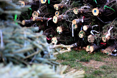 Sarah Nader - snader@shawmedia.com Trees are bundled together at the Knights of Columbus Christmas Tree Lot at Saint Margaret Mary Church in Algonquin on Sunday, November 25, 2012. The lot opened last Friday and proceeds benefit various charities.