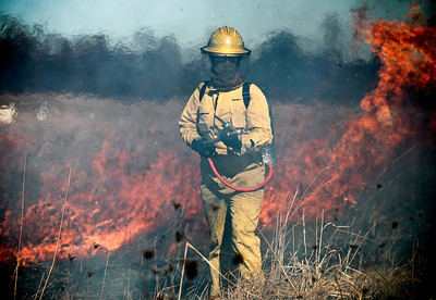Josh Peckler - Jpeckler@shawmedia.com A firefighter with the Davey Resource Group is surrounds by smoke and flames during a prescribed burn at The Sanctuary of Bull Valley housing community in Woodstock Tuesday, November 13, 2012.