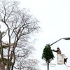 A City of St. Charles worker uses a chain saw to shape one of many Christmas trees atop a street light along Main Street Friday morning.