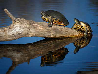 hcomm_adv_turtles_pond