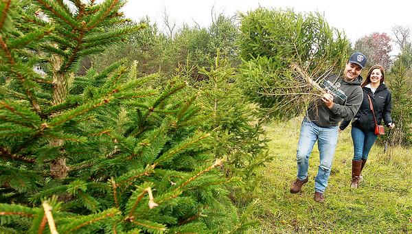 LCJ_1201_Sullivans_Tree_FarmE