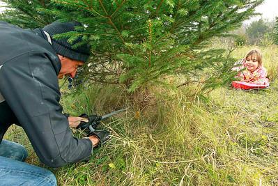 LCJ_1201_Sullivans_Tree_FarmG
