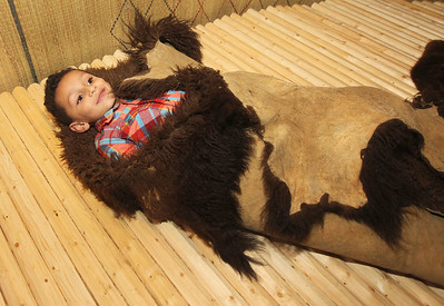 Candace H. Johnson-For Shaw Media Hayden Willoughby, 6, of Wauconda gets wrapped in a Bison hide used as a blanket or coat by Native Americans in an exhibit of a Potawatomi wigwam during Fall Family Fest at the Lake County Forest Preserves Bess Bower Dunn Museum in Libertyville. (11/17/18)