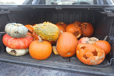 Candace H. Johnson-For Shaw Media Twenty-three pumpkins from the Betke family, of Grayslake sit in the back of their truck waiting to be put into a dumpster to be turned into compost during Pumpkin Recycling & Fall Fun Day at Woodland Intermediate School in Gurnee. The pumpkins will go to Midwest Organics Recycling in McHenry to make compost. (11/2/19)