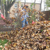 Batava High School freshmen Ivana Cortez and Kiley Penman, both 14, rake leaves in Cindae Race's backyard Sunday afternoon for the Batavia United Way's Day of Caring.