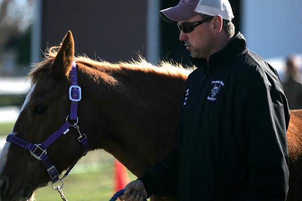Equine Emergency Training