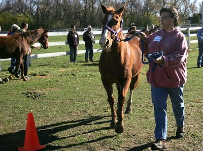 Monica Maschak - mmaschak@shawmedia.com Michelle Frank, of the Hooved Animal Humane Society, practices leading a scared horse while running during a training session for first responders in Woodstock on Saturday.
