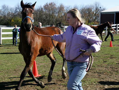 Monica Maschak - mmaschak@shawmedia.com Mary Hood, of the McHenry County Horse Club, practices leading a scared horse during a training session for first responders in Woodstock on Saturday.