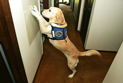 H. Rick Bamman - hbamman@shawbedia.com  Theresa Waldspurger's, service dog Emma has been trained to turn on the hallway light in their Cary home.  Waldspurger suffers from muscular dystrophy  and has service dogs her entire life.