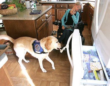 H. Rick Bamman - hbamman@shawbedia.com  Service dog Emma opens the freezer door for Theresa Waldspurger in thier Cary home. Waldspurger who suffers with muscular dystrophy has had service dogs her entire life.