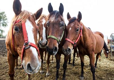 hnws_fri1003_abandoned_horses1.jpg