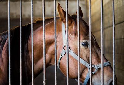 hnws_fri1003_abandoned_horses2.jpg