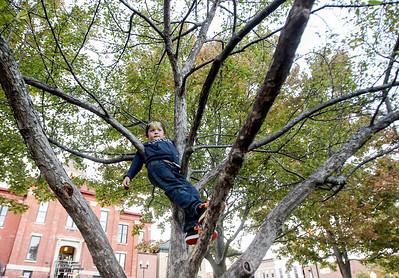 2a_adv_tree_climbing.jpg