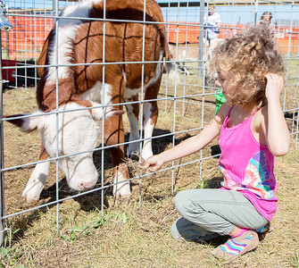 Olivia Innes (5yrs) from Long Island NY, makes a new friend at Cody's Farm during Settlers' Days in Marengo Sunday, October 8, 2017.  KKoontz- For Shaw Media