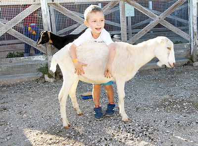 Candace H. Johnson-For Shaw Media Matthew Petkov, 4, of Prairie View hangs out with a goat in the Farmyard during Fall on the Farm at Lambs Farm in Libertyville.