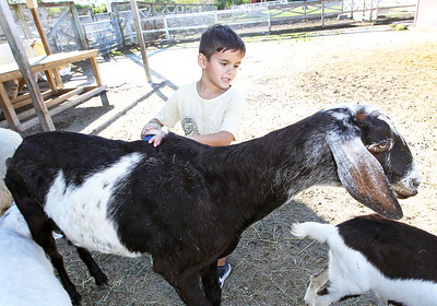 Candace H. Johnson-For Shaw Media Andrei Ivanov, 6, of Round Lake brushes a goat in the Farmyard during Fall on the Farm at Lambs Farm in Libertyville.