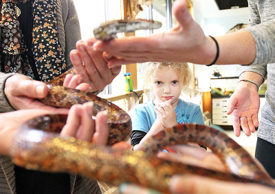 Candace H. Johnson-For Shaw Media Lana Kustra, 5, of Cary decides whether she wants to touch, Pudding, a corn snake, during the Oaktober Celebration at the Round Lake Area Park District's Aquatic Center and Prairie Grass Nature Museum in Round Lake.