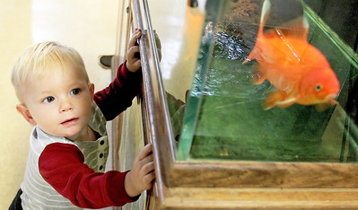 Candace H. Johnson-For Shaw Media Wyatt Kustra, 1, of Cary looks at a goldfish during the Oaktober Celebration at the Prairie Grass Nature Museum in the Round Lake Area Park District's Aquatic Center building in Round Lake.