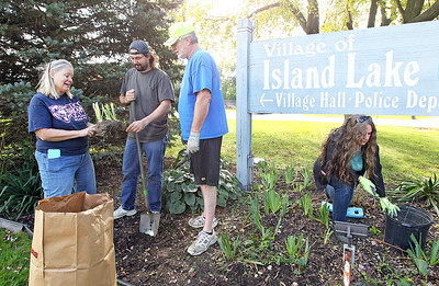 Candace H. Johnson-For Shaw Media Sandy Doehler, Mark Beeson, John Burke, and Mark's wife, Christine, all of Island Lake plant iris rhizomes next to the Village of Island Lake's Village Hall and Police Department sign on Greenleaf Avenue for the Irises of Island Lake project in Island Lake. Sandy Doehler, Mark Beeson and John Burke are trustees for the Village of Island Lake.