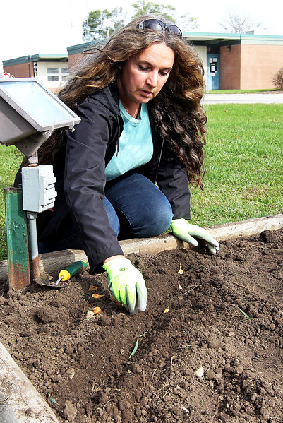 Candace H. Johnson-For Shaw Media Christine Beeson, of Island Lake plants Dutch iris bulbs in a row in the dirt next to the flagpole outside of the Village Hall for the Irises of Island Lake project in Island Lake. Beeson's husband, Mark is a trustee for the Village of Island Lake.