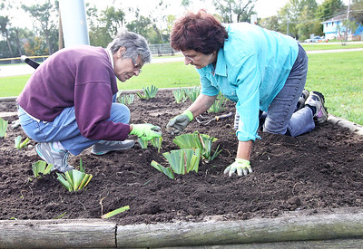Candace H. Johnson-For Shaw Media Mary Schuman and Georgine Cooper, both of Island Lake work on putting iris rhizomes in the dirt next to the flagpole near the Village Hall for the Irises of Island Lake project in Island Lake.