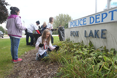 Candace H. Johnson-For Shaw Media Stanton Middle School's Hailey Montanez, 11, of Fox Lake (center) picks weeds with other students in front of the Fox Lake Fire Dept. on Route 59 during the Fox Lake Grade School District 114's 4th Annual Day of Service. (9/28/18)