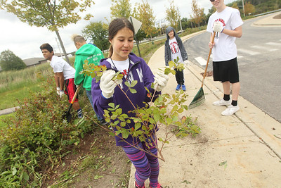 Candace H. Johnson-For Shaw Media Stanton Middle School's Samantha Melillo, 12, of Fox Lake carries a branch she found while pulling weeds outside of Grant Community High School in Fox Lake during the Fox Lake Grade School District 114's 4th Annual Day of Service. (9/28/18)