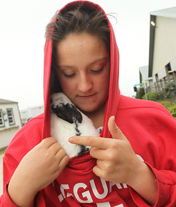 Candace H. Johnson-For Shaw Media Savanna Lehman, 12, of Antioch pets a friend's rabbit she was keeping warm in her sweatshirt during the Lake County Farm Heritage Association's Farm Heritage & Harvest Festival at the Lake County Fairgrounds in Grayslake.  (9/28/19)