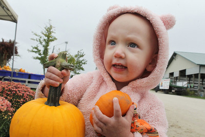 Candace H. Johnson-For Shaw Media Emerson O'Dea, 2, of Mundelein holds some pumpkins she wants to get from the Beelow family farm during the Lake County Farm Heritage Association's Farm Heritage & Harvest Festival at the Lake County Fairgrounds in Grayslake.  (9/28/19)