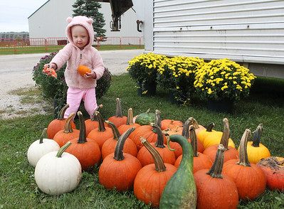 Candace H. Johnson-For Shaw Media Emerson O'Dea, 2, of Mundelein checks out the pumpkins for sale from the Beelow family farm during the Lake County Farm Heritage Association's Farm Heritage & Harvest Festival at the Lake County Fairgrounds in Grayslake.  (9/28/19)
