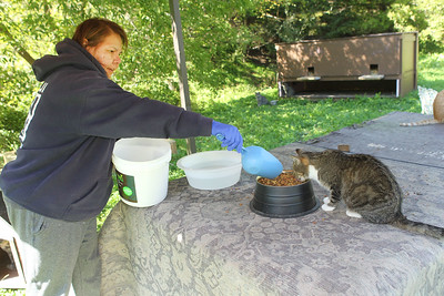 Candace H. Johnson-For Shaw Media Nellie Kathain, of Wadsworth,  head feeder, fills up a bowl of dry food for the outdoor cats, at Fat Cat Rescue in Wadsworth.  (10/6/19)
