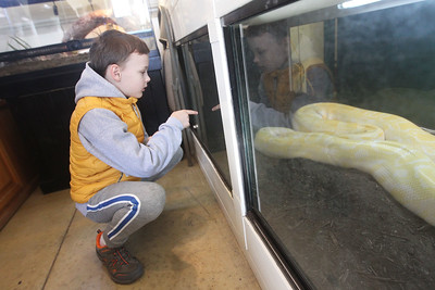 Candace H. Johnson-For Shaw Media Dan Doun, 9, of Chicago looks at a Burmese python named, Dorothy, eighteen feet long, the third largest species of snakes in the world during CROCtoberfest at the Wildlife Discovery Center in Lake Forest. (10/27/19)