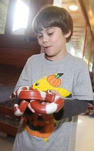 Candace H. Johnson-For Shaw Media Georgi Battersby, 7, of Chicago holds an albino Nelson's milksnake during CROCtoberfest at the Wildlife Discovery Center in Lake Forest. (10/27/19)