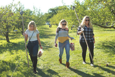 Candace H. Johnson-For Shaw Media Dena Franchi, of Buffalo Grove, Layna Schubert and Allie White, both of Vernon Hills walk through the orchard carrying their bags of apples after they went apple picking at Heinz Orchard in Green Oaks. (9/19/20)