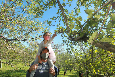 Candace H. Johnson-For Shaw Media Dustin Ferrell, of Chicago carries his daughter, Amelia, 5, on his shoulders as they go apple picking at Heinz Orchard in Green Oaks. (9/19/20)