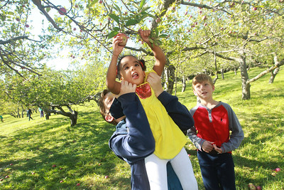 Candace H. Johnson-For Shaw Media Daniel Holman, 11, of Schaumburg gives his sister, Eileen, 3, a lift, next to their brother, Jackson, 9, as they pick apples at Heinz Orchard in Green Oaks. (9/19/20)