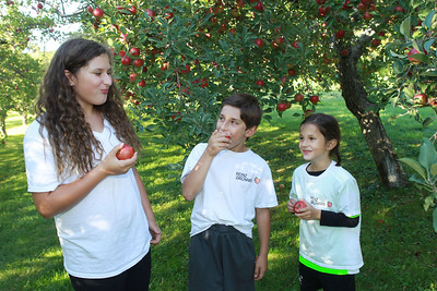 Candace H. Johnson-For Shaw Media Zoe DeMoon, 11, of Libertyville and her siblings, Sam, and Thalia, 6, enjoy eating Empire apples off the tree after working at the Heinz Orchard in Green Oaks. (9/19/20)