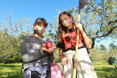Candace H. Johnson-For Shaw Media Yuki Dogadalski, 11, of Libertyville and her sister, Lena, 13, check out an apple they picked at Heinz Orchard in Green Oaks. The sisters were picking apples with their mother, Mayumi. (9/19/20)