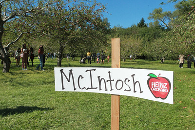 Candace H. Johnson-For Shaw Media Visitors come to pick McIntosh apples at Heinz Orchard in Green Oaks. The next opportunity to pick apples at the Heinz Orchard is Friday, September 25th, 10-4 pm. Empire, McIntosh and Jonathan apples will be available. (9/19/20)