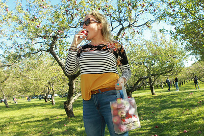Candace H. Johnson-For Shaw Media Layna Schubert, of Vernon Hills takes a bite of a McIntosh apple she picked at Heinz Orchard in Green Oaks. (9/19/20)